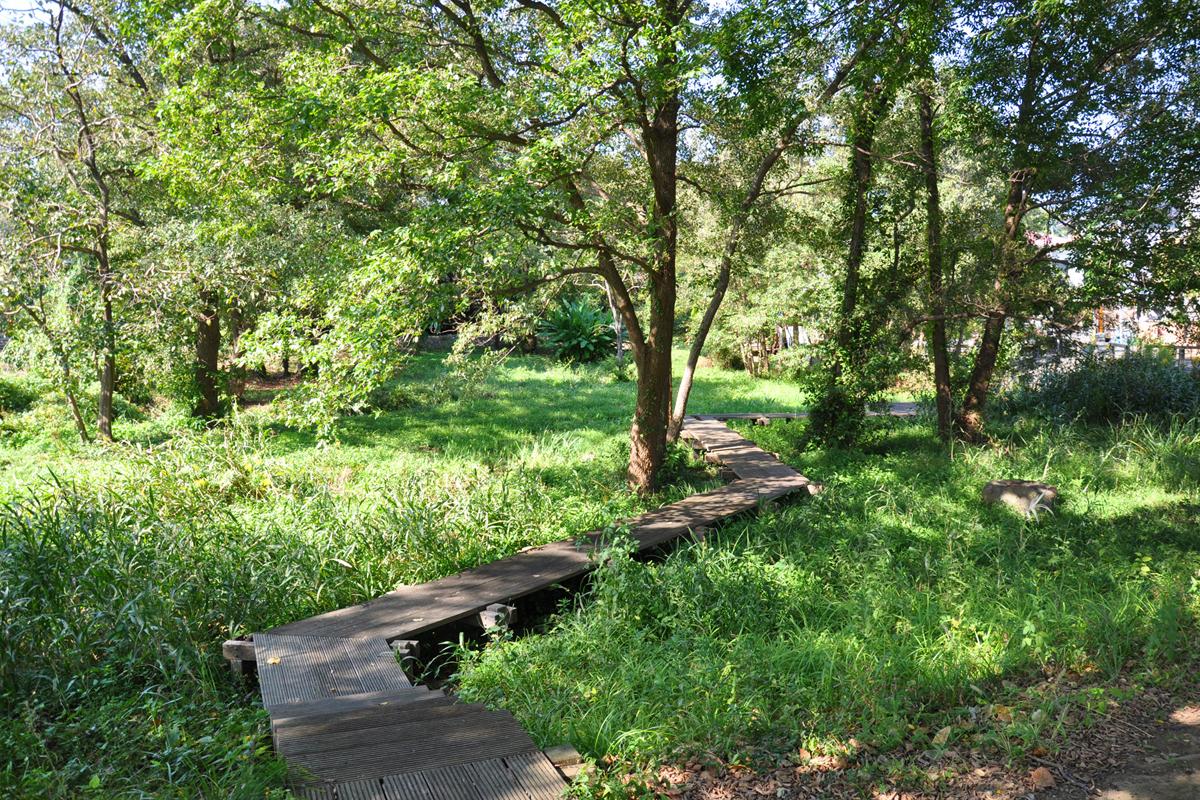 境川・清住緑地、丸池